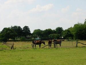 Ein Paradies für Pferde
