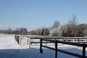 Im Winter geniessen die Pferde die Mittagssonne