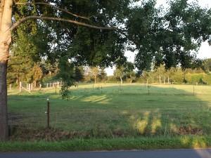 Weitere Weiden auf der anderen Straßenseite