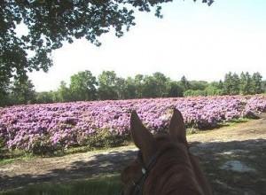 Wunderschöner Ausblick im Moor