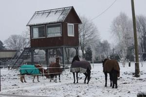 Auf Wunsch können die Pferde einzeln oder gemeinsam stehen