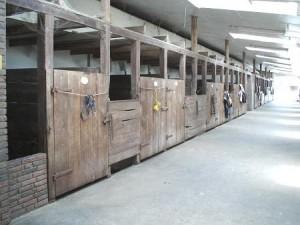 Jede Menge ist so angelegt das die Pferde die Möglich zum 'raus' schauen ohne Gitterstäbe haben